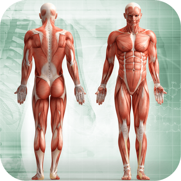 Human Body - All You Need To Know