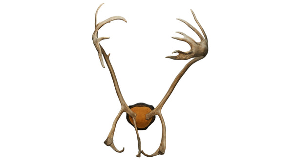 Caribou Padded Antlers