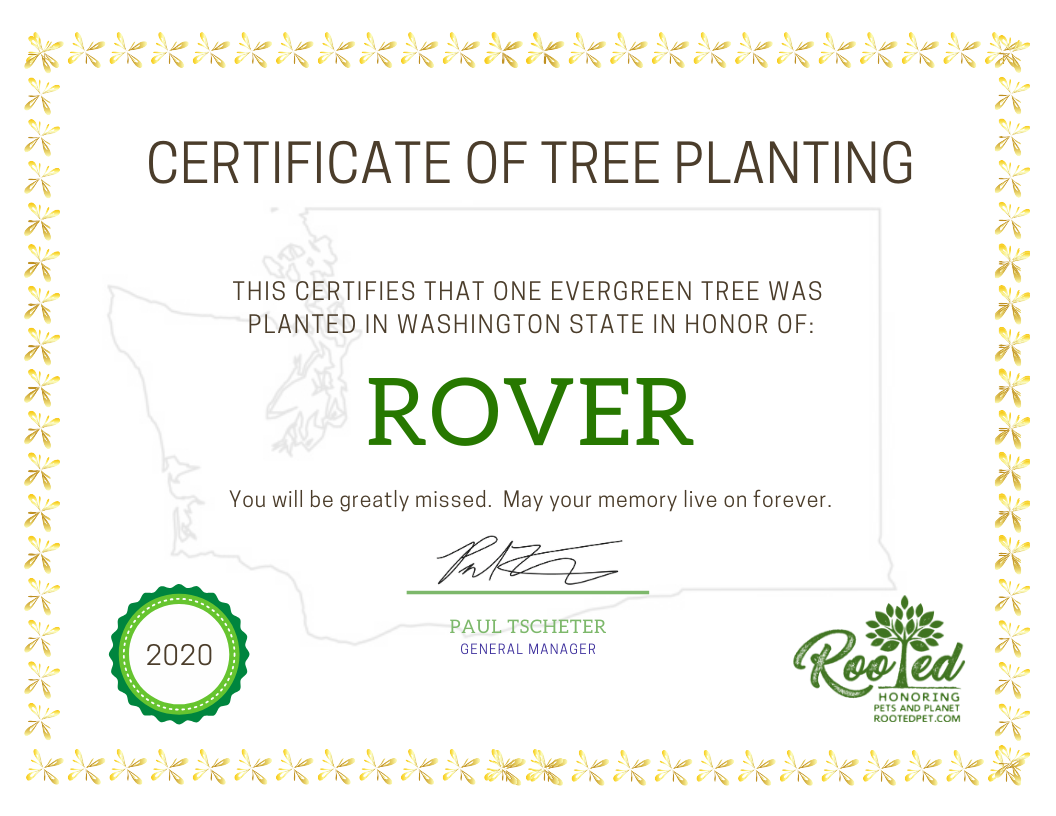 Rooted Pet Memorial | Tree Planting Certificate - Paper