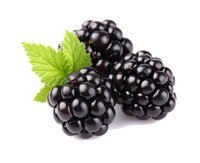 Blackberry E-Liquid - Bang Bang Vapors