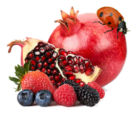 Pomegranate Berries E-Liquid - Bang Bang Vapors, LLC