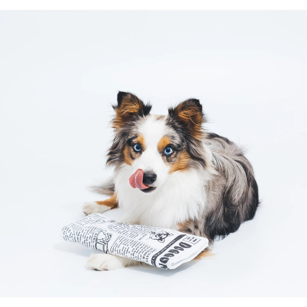 Krinkle Dog Newspaper