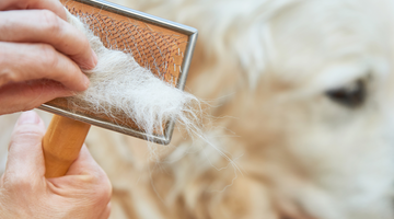 Reducing Dog Shedding and Keeping Your Home Clean
