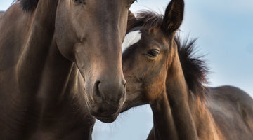 Healthy Foals Start With Healthy Mares