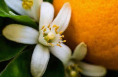 neroli, vitamin e oil, best natural organic vitamin e oil