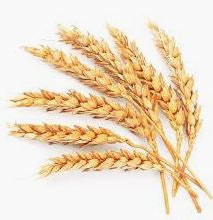 wheatgerm, best vitamin e oil, best natural organic vitamin e oil