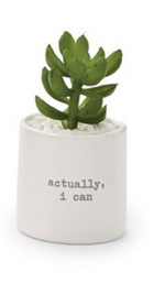 Positive Potted Succulents
