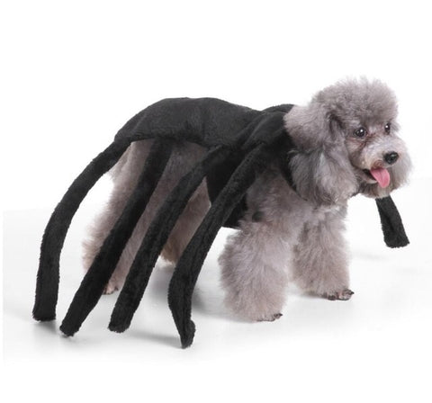 Image of Spider Dog Costume