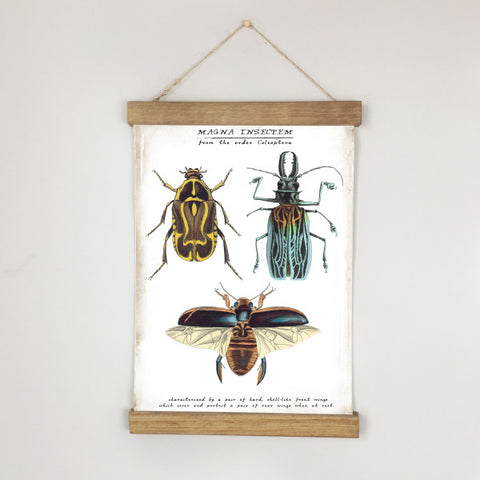 Museum Chart  - Beetle No. 2