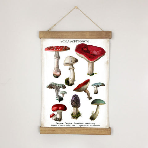 Museum Chart - Mushrooms