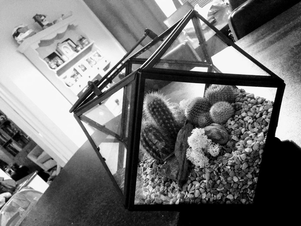 Ouch... we're about to launch our new Cacti Terrariums!!!!