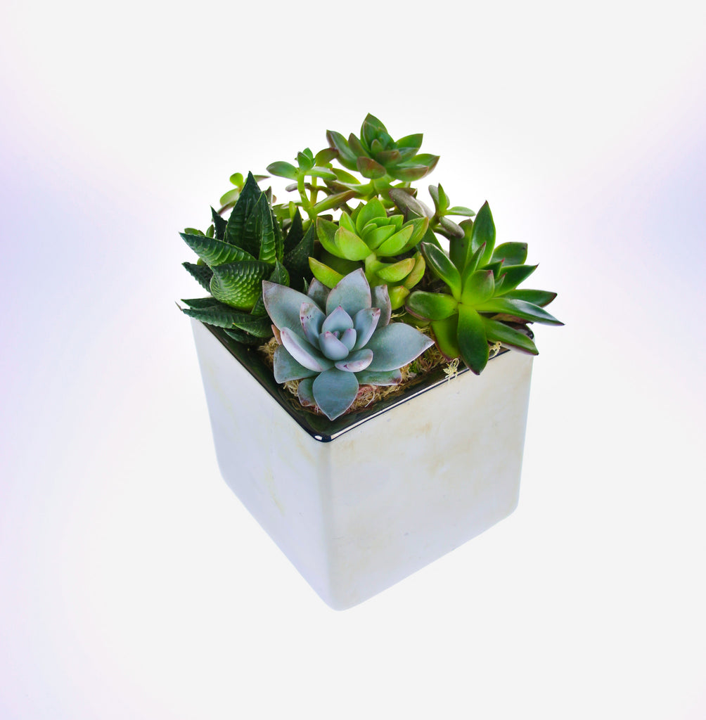 You'll LOVE Our New Fully Assembled Succulent Planters