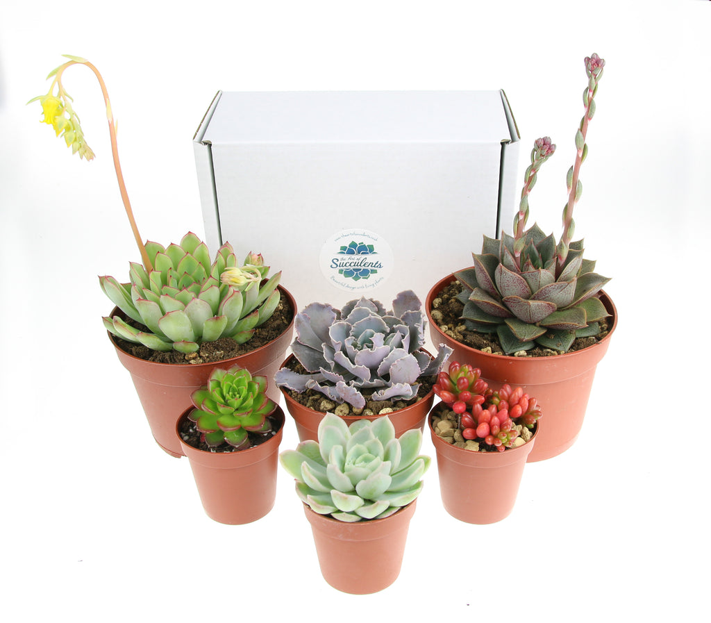 Handy Plant Selection Packs Now In Store