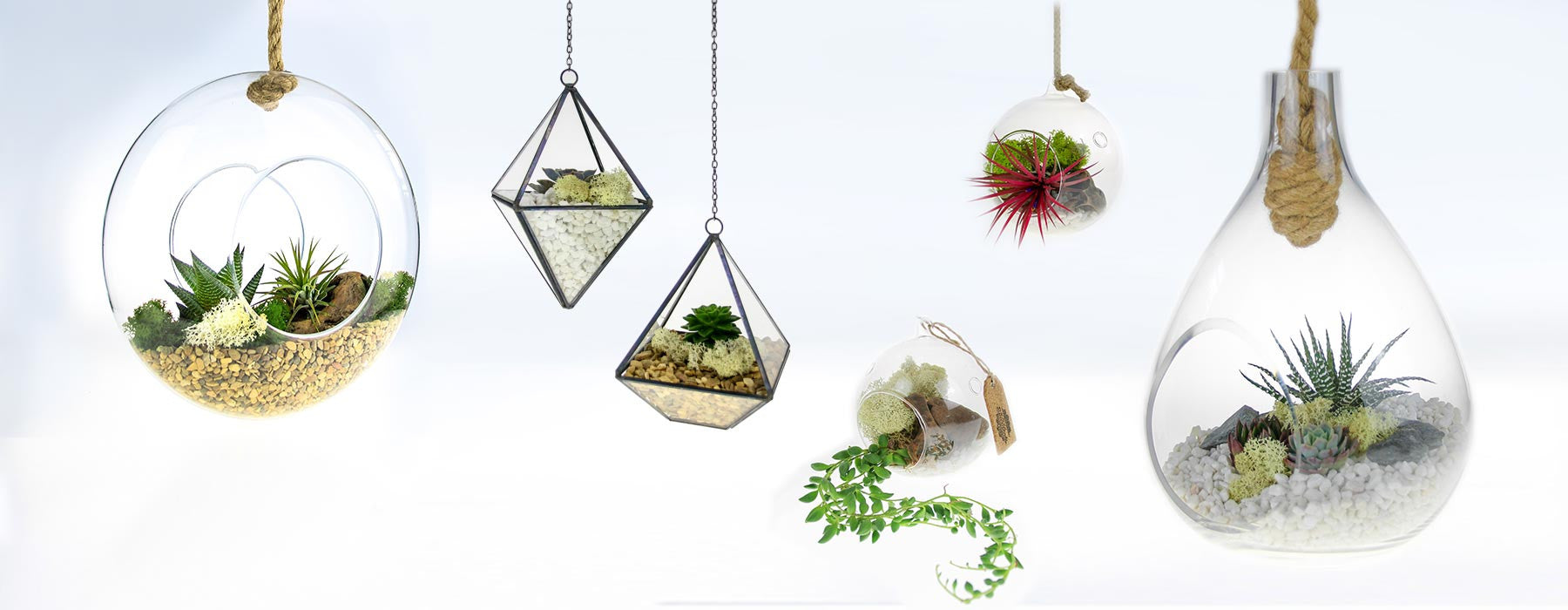 Hanging Terrarium Kits Home Accessory Ideas Uk The Art Of Succulents