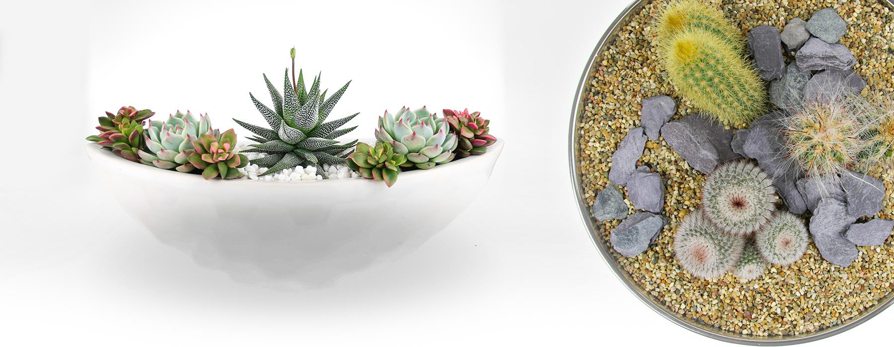 Indoor Planters In The Uk For Succulents Cacti And Air Plants The Art Of Succulents