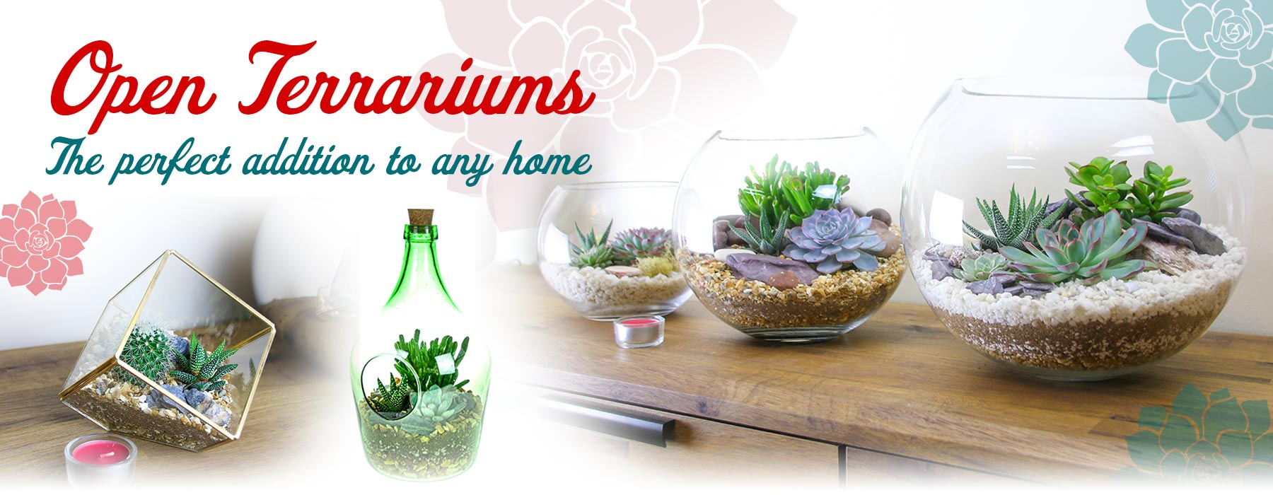 Buy Terrarium Kits In The Uk Featuring Living Succulent Plants