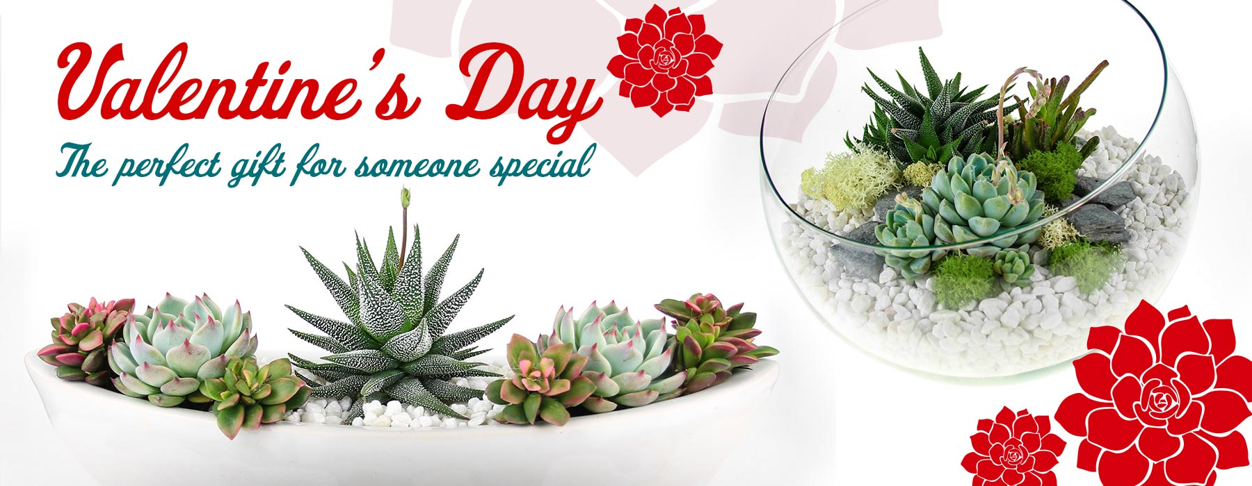 Valentine S Day Terrarium Gifts Featuring Real Succulent Plants Air Plants And Cacti The Art Of Succulents