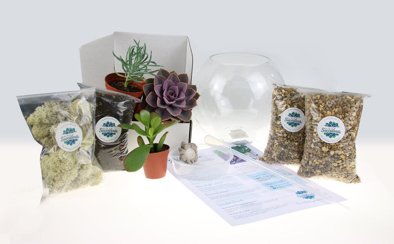 DIY Terrarium Kit Contents from The Art of Succulents