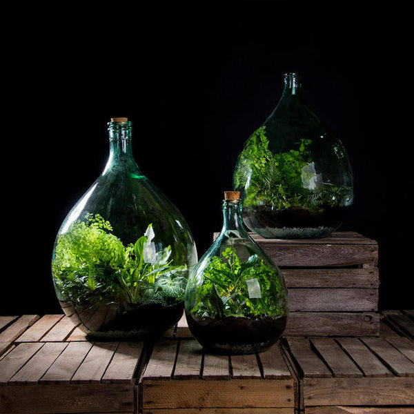 CLosed bottle terrarium kit to buy online