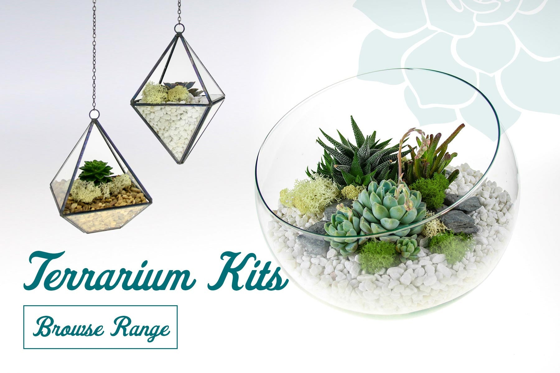 Diy Terrarium Kits Succulents Air Plants The Art Of Succulents