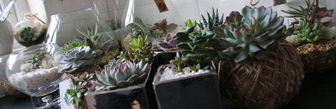The Art of Succulents terrariums and planters