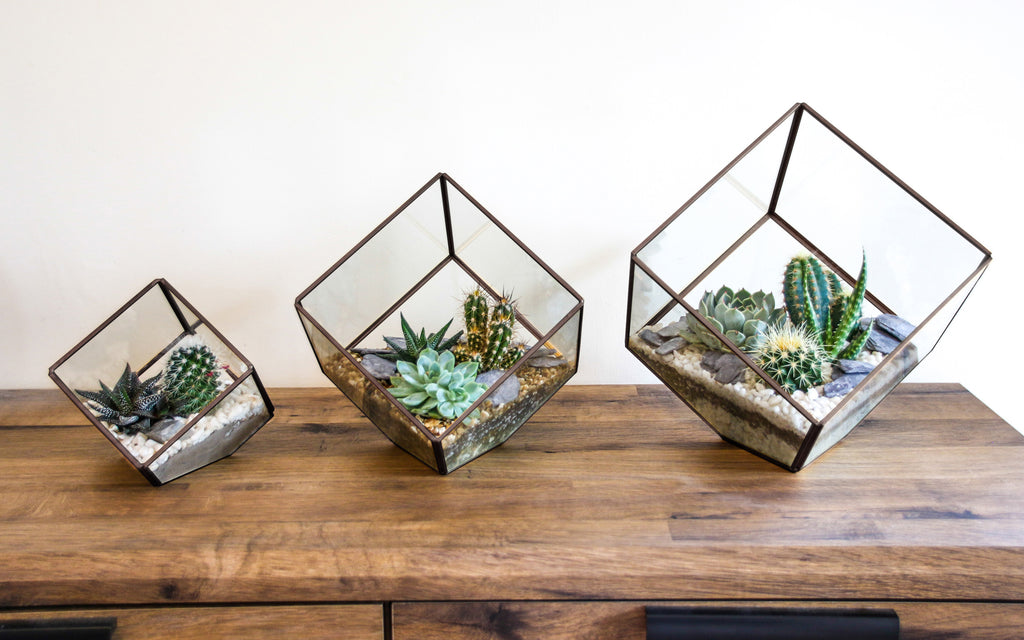 set of 3 terrariums with real cactus and succulent plants