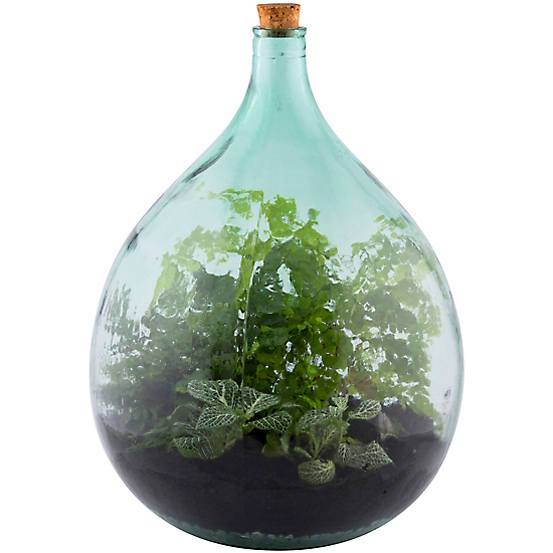 35 litre large closed terrarium glass bottle