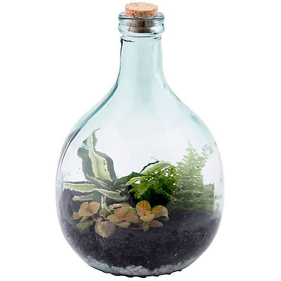 5 litre closed bottle tarrarium ecosystem