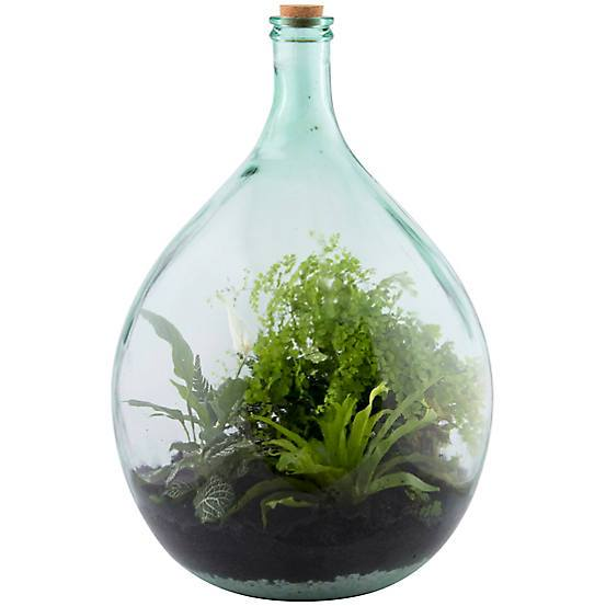 55 litre large closed glass terrarium