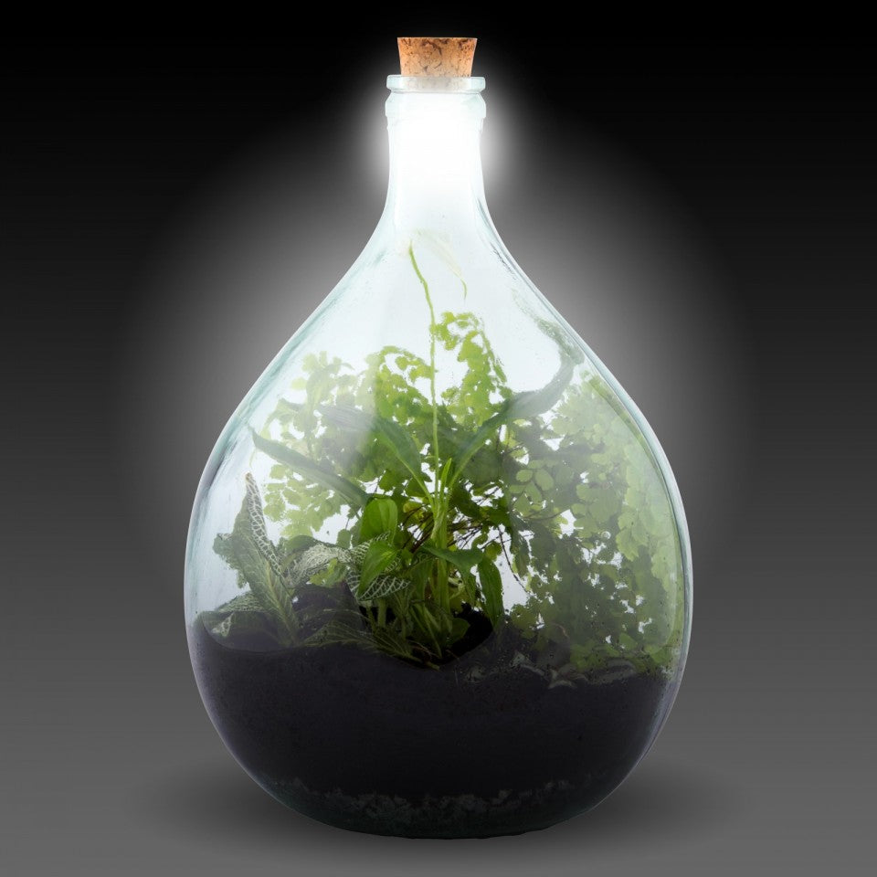 Solar cork light terrarium bottle