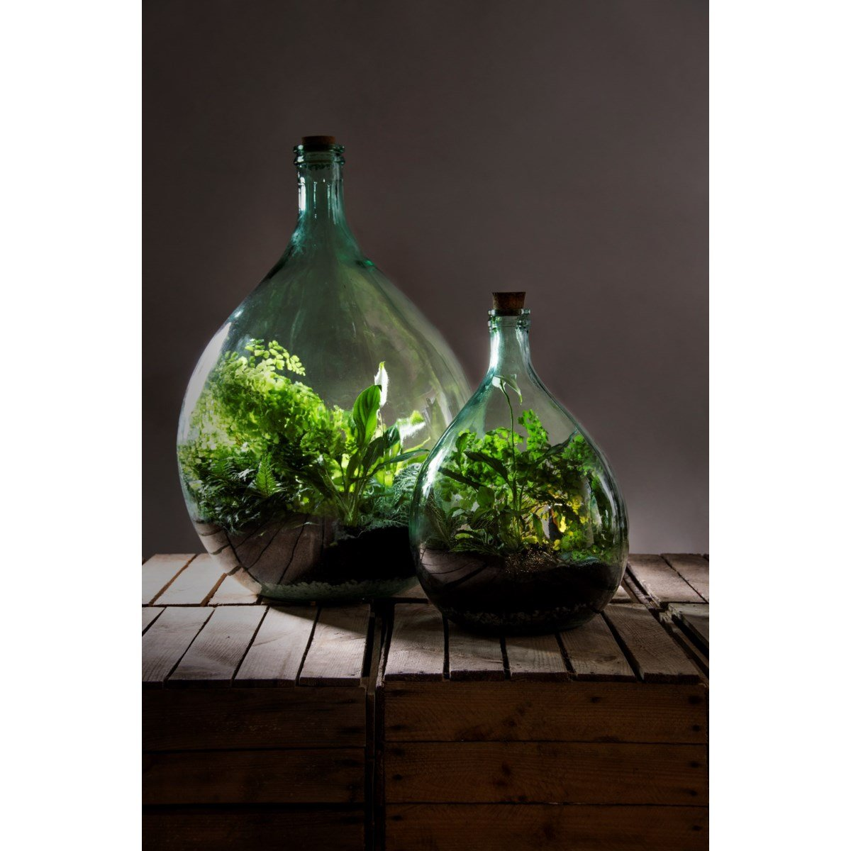 Large Sized Closed Glass Bottle Terrarium 55 Litre For Indoor Plants The Art Of Succulents