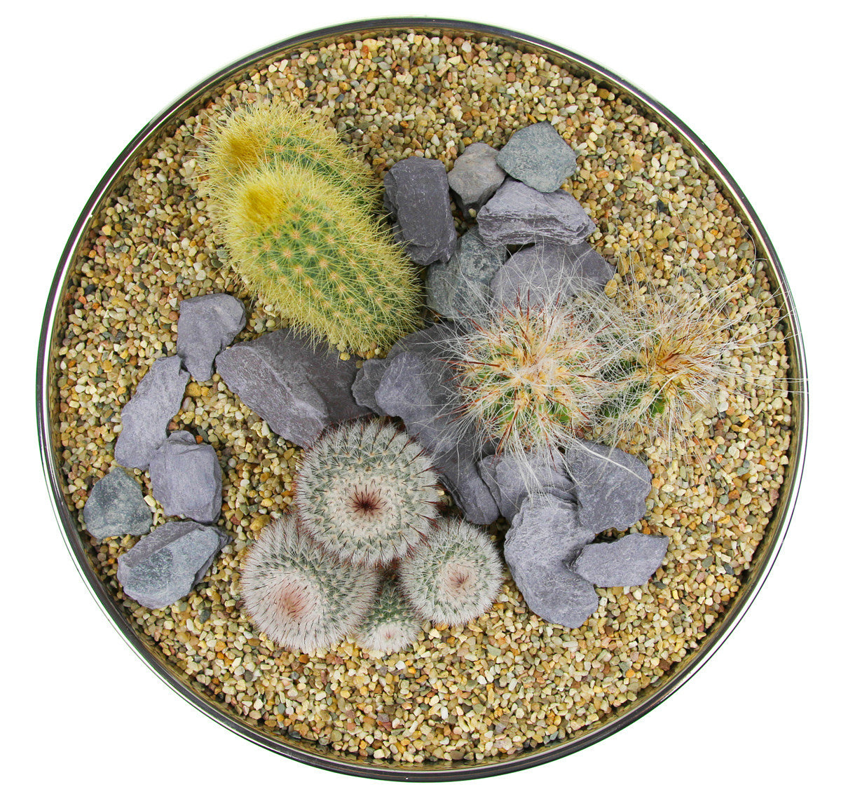 Cactus Planter With Large Contemporary Mirror Bowl Indoor