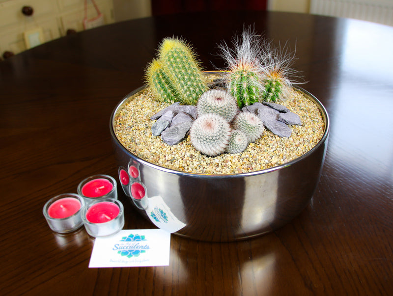 Cactus Planter with Large Contemporary Mirror Bowl