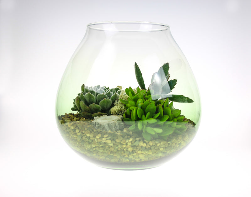 Succulent Terrarium in Glass Vase