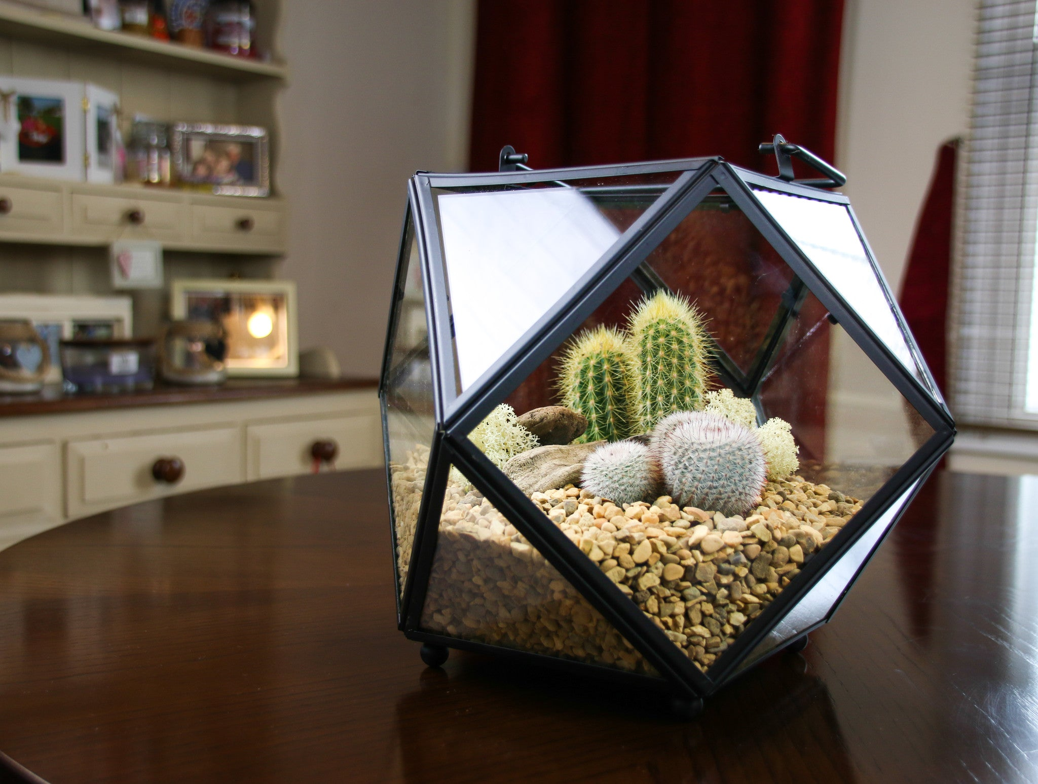 Cactus Terrarium Kit Stunning Large Geometric Design Uk The Art Of Succulents