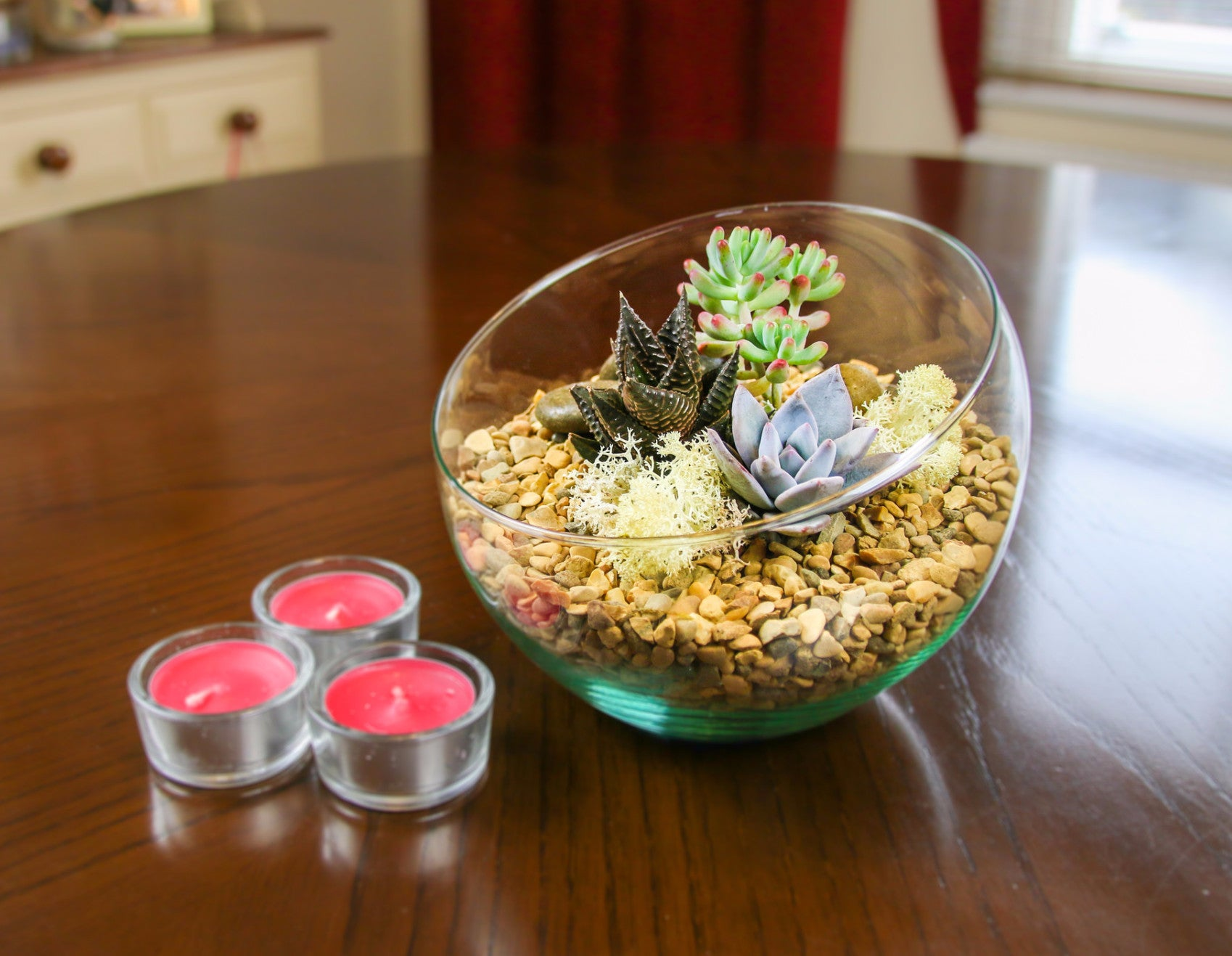 Angled Glass Bowl Terrarium Kit With Miniature Succulent Plants Gift The Art Of Succulents