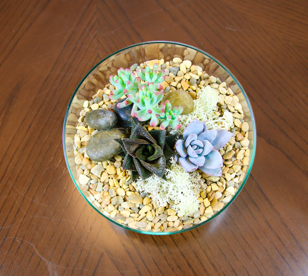 Succulent indoor plant ideas