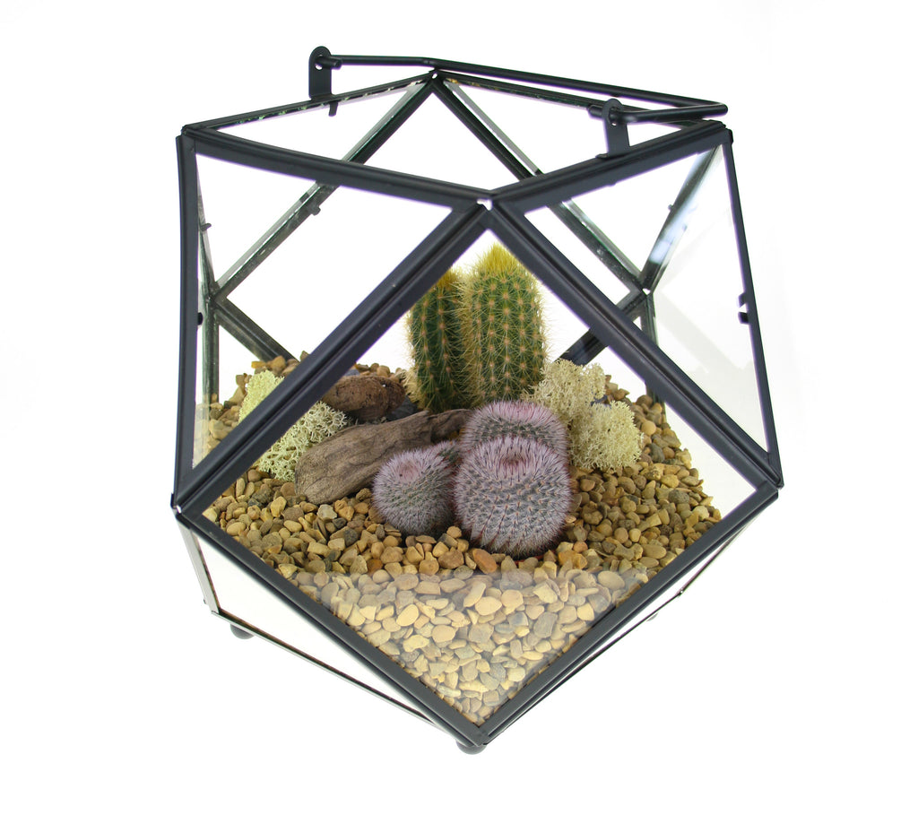 Cacti Terrariums to buy in the UK