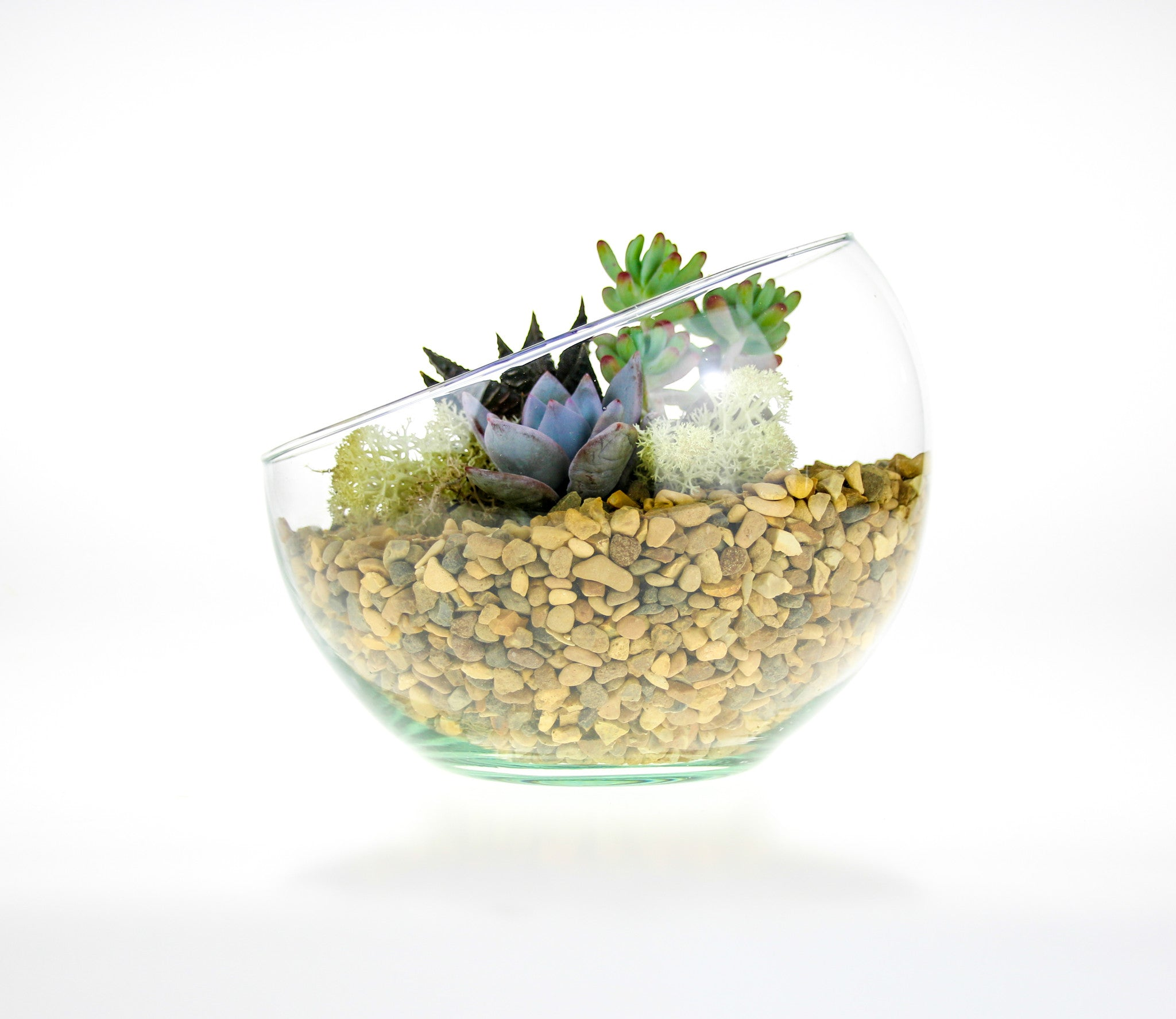 Angled Glass Bowl Terrarium Kit With Miniature Succulent Plants