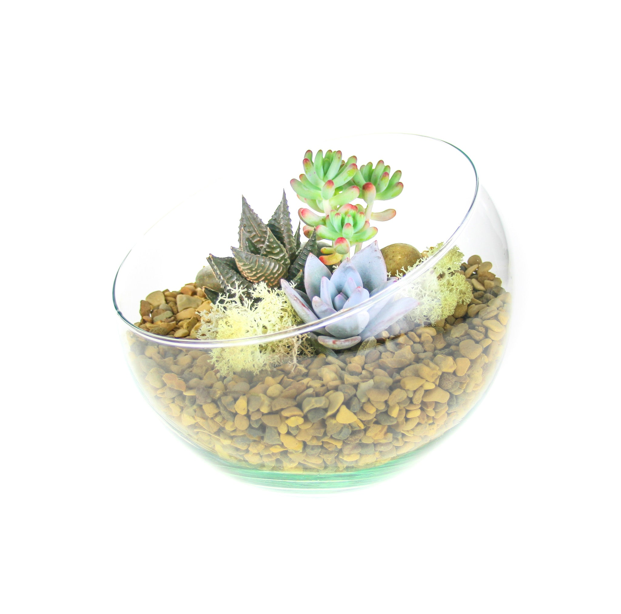 Angled Glass Bowl Terrarium With Gorgeous Miniature Plants Small