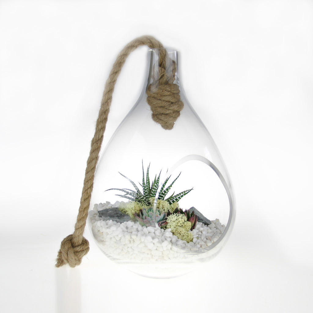 UK shop for Terrariums