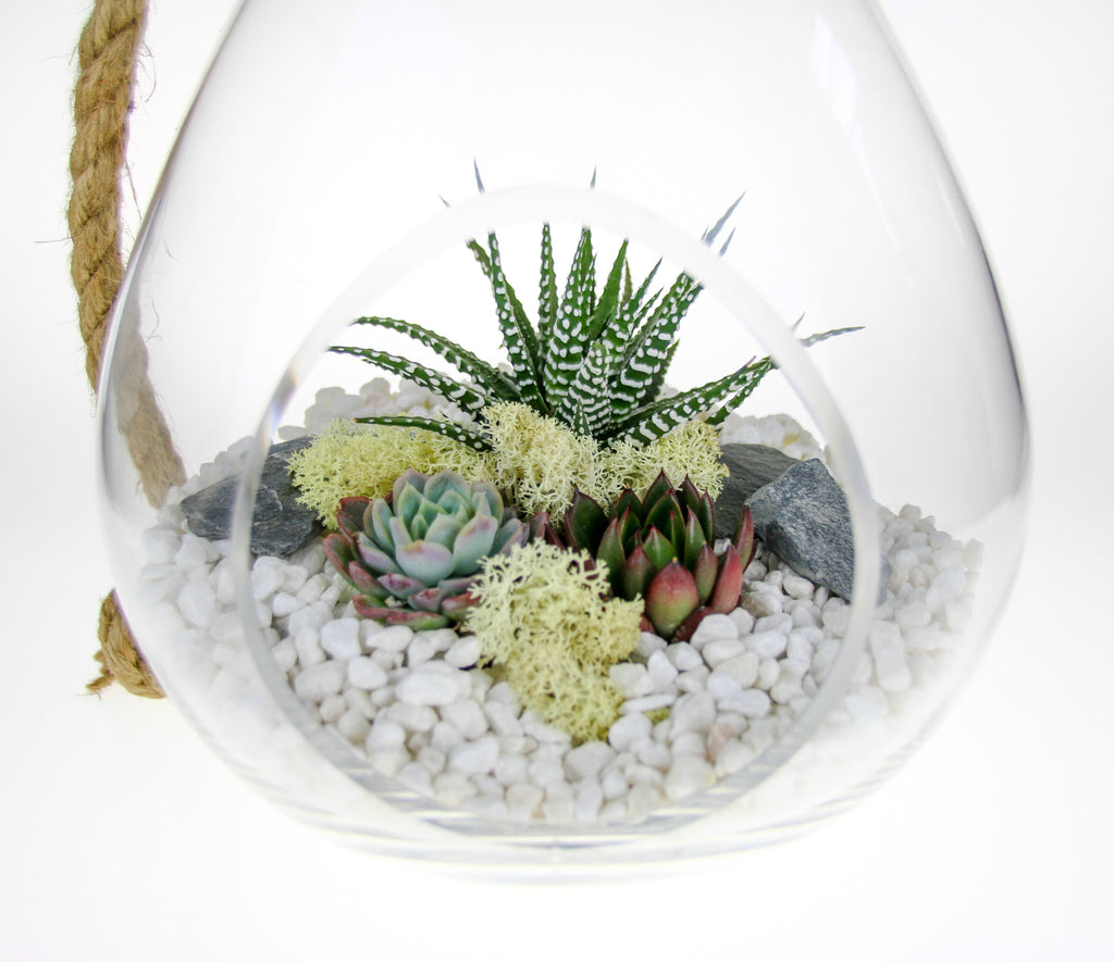 Succulent plants in glass terrarium