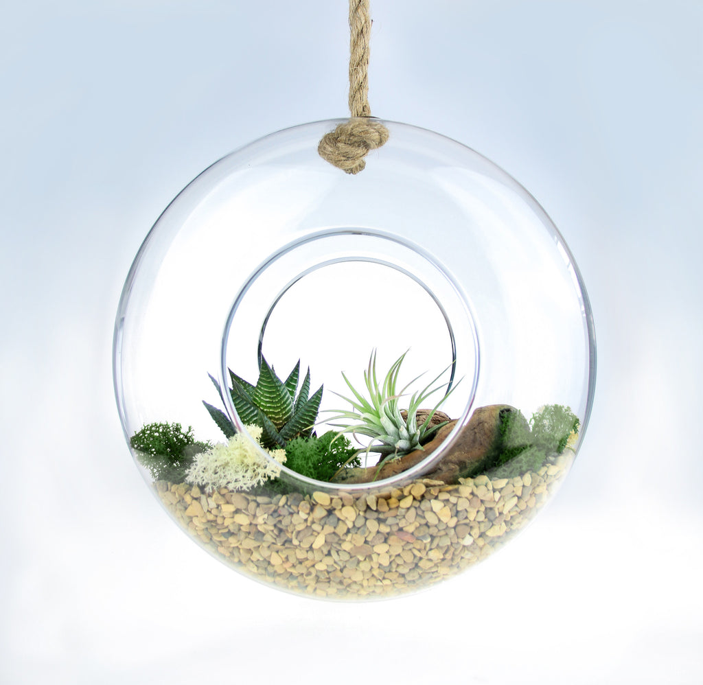 Air plant diy terrarium kit