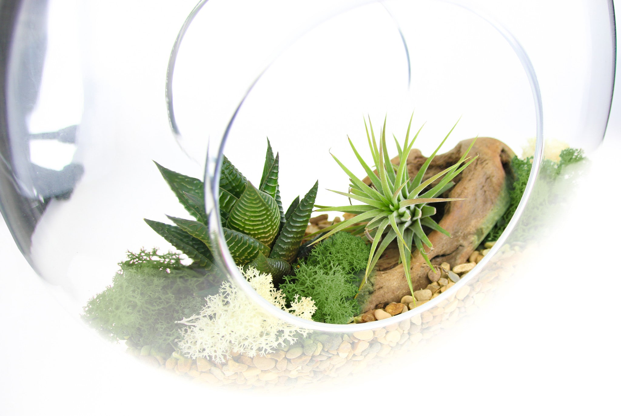 Air Plant Succulent Terrarium Kit Beautiful Hanging Glass Rope The Art Of Succulents