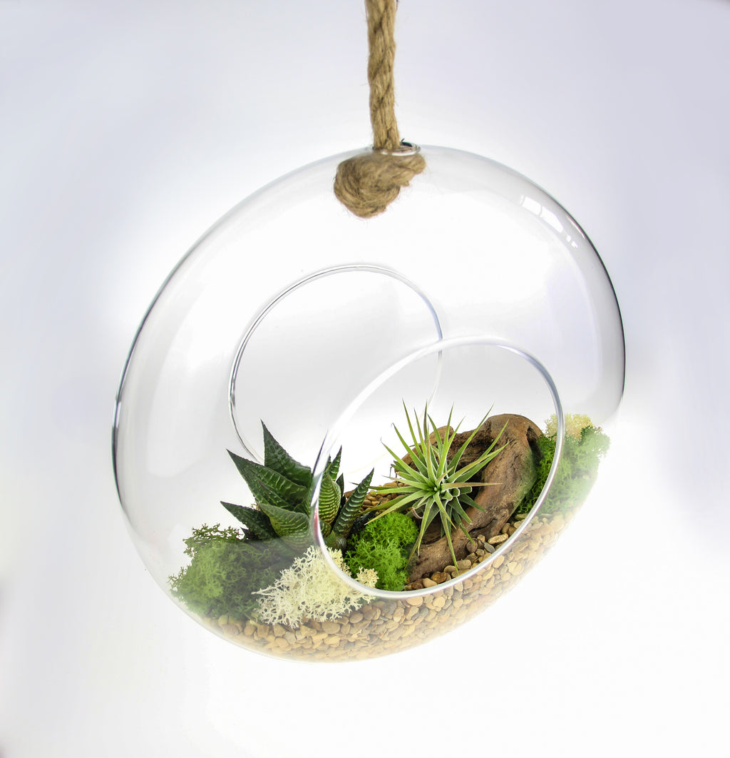 Glass and Rope terrarium kit with air plants