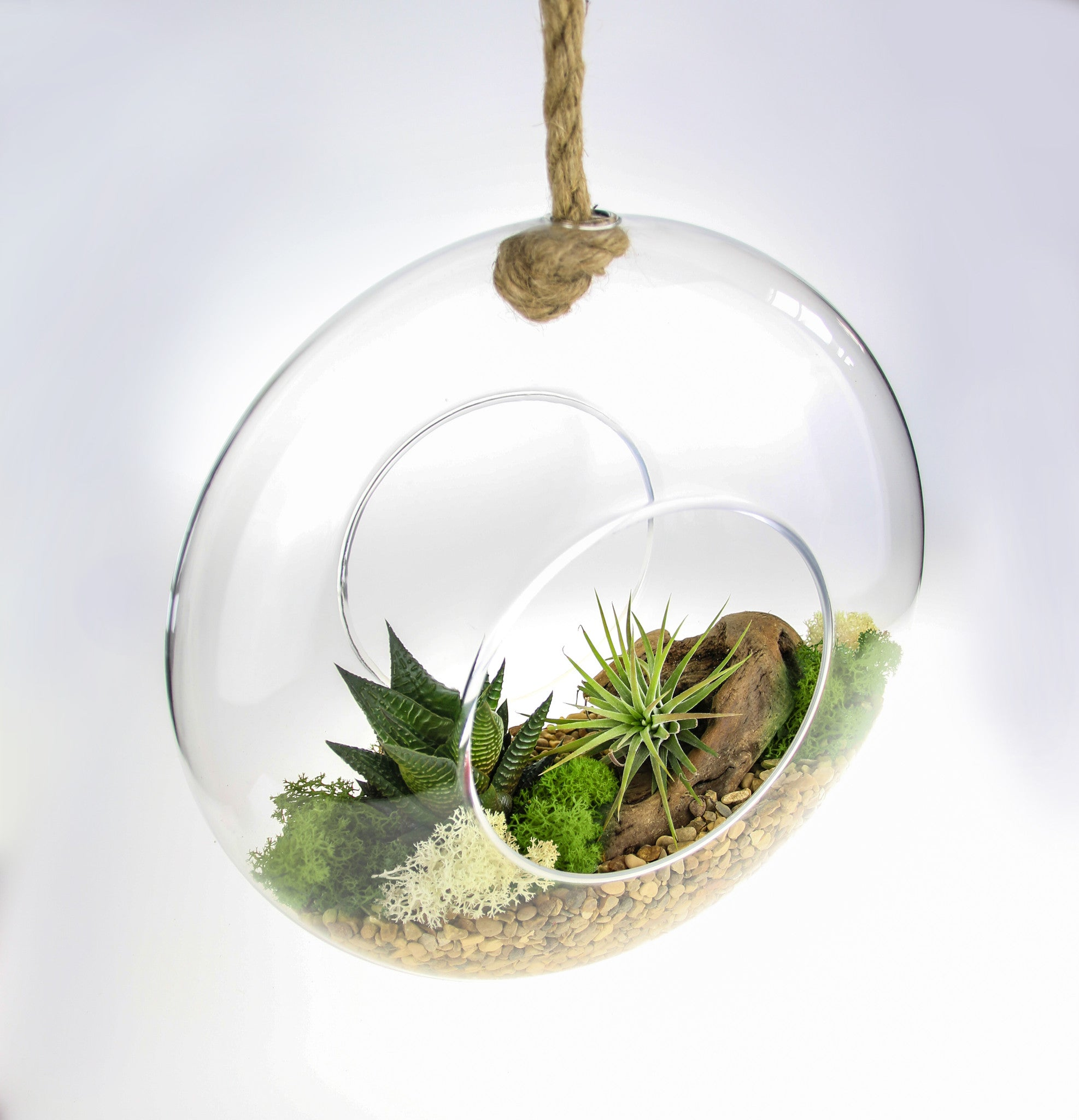 Air Plant Succulent Terrarium Kit Beautiful Hanging Glass Rope
