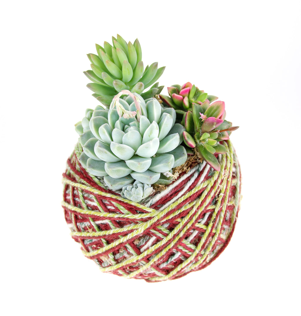 Kokedama with Succulent Plants