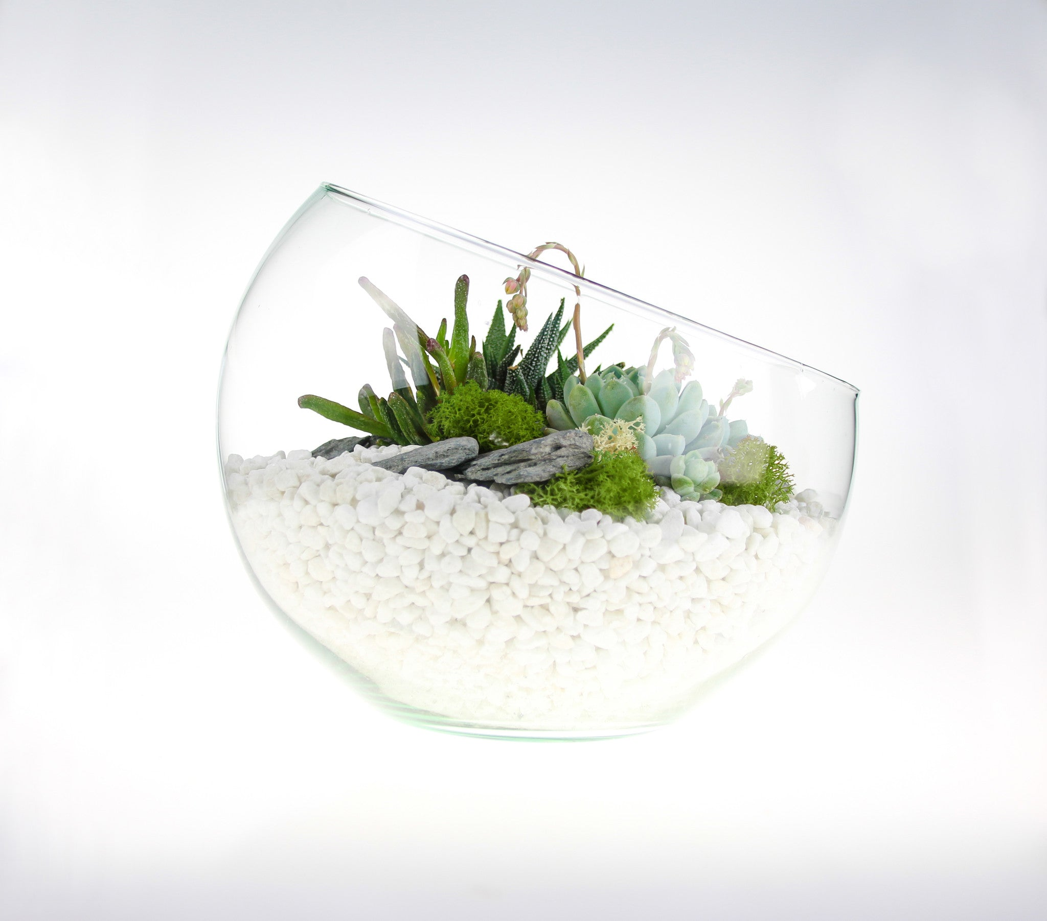 Large Angled Glass Bowl Terrarium Kit With Succulent Plants Home