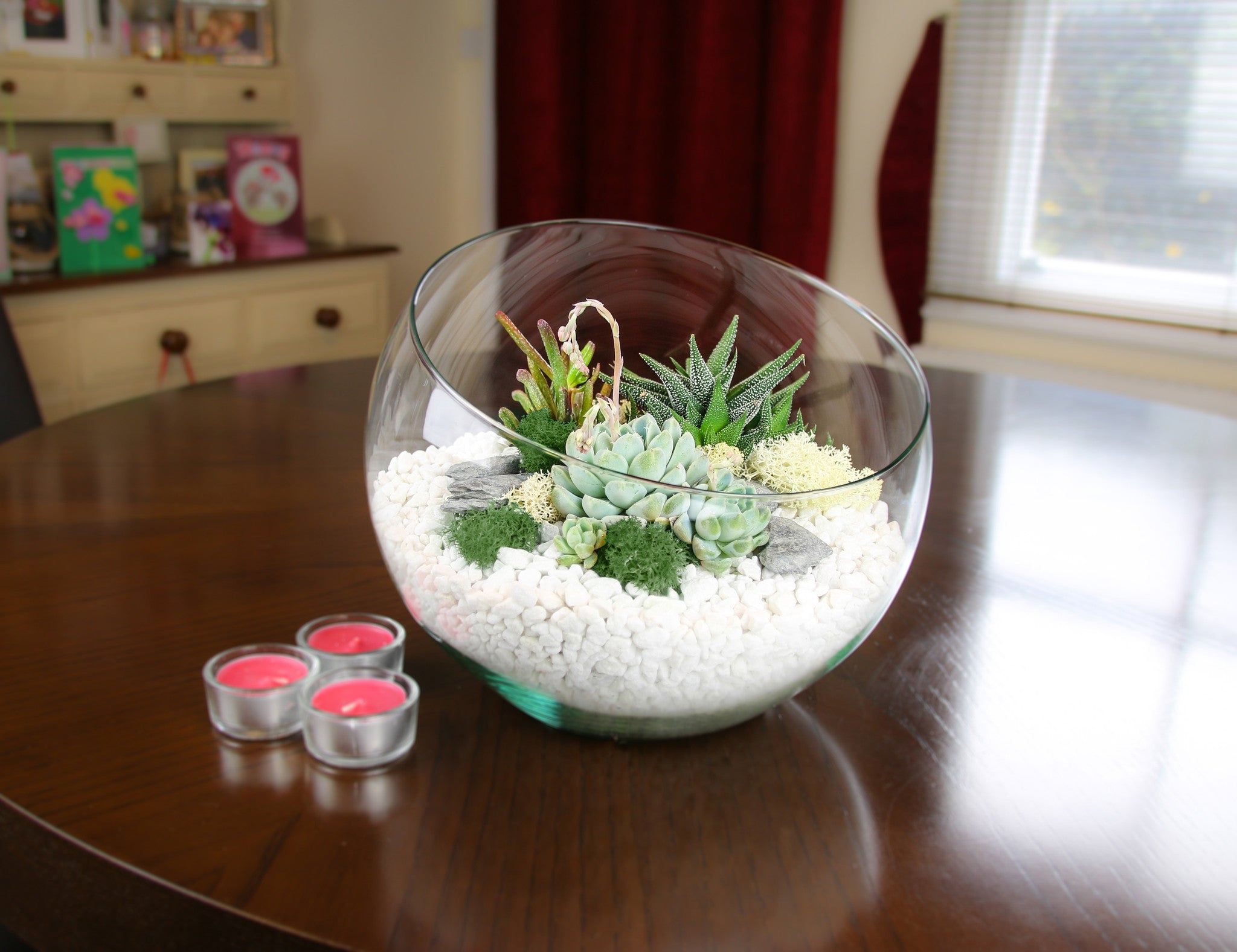 Large Angled Glass Bowl Terrarium Kit With Succulent Plants Home Accessory Gift The Art Of Succulents
