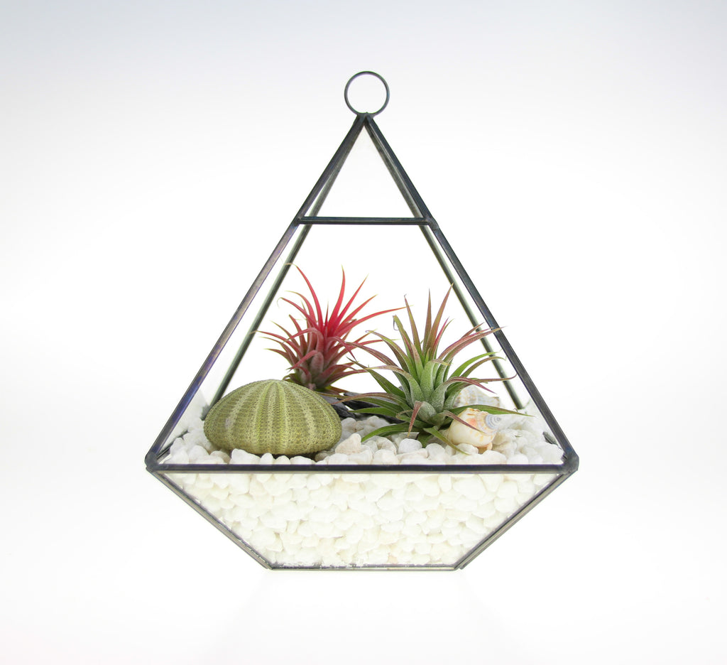 Air Plant DIY Terrarium